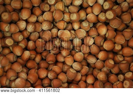 Dry Brown Hazel Nuts Background. Pile Of Unpeeled Brown Hazel Nuts Close Up.