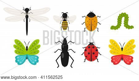 Collection Of Insects. Butterfly, Beetle, Bee, Caterpillar, Ladybug, Dragonfly. Summer, Spring Cute