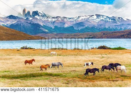Herd of wild horses graze on the yellow grass. Lagoon Azul is mountain lake near three rocks - torres. The mountain range is covered with eternal snow. The Torres del Paine park in Chile