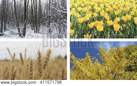 Different Four Colored Images Of Nature For Calendar. Ready Photo For Calendar. Pictures For Yearly