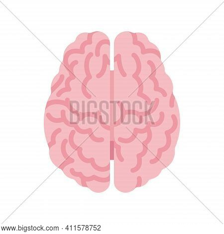 Human Brain Anatomical Study, Medical, Scientific Classroom Model Top View. Nervous System Central O