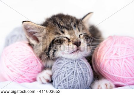 Cute Cat Sleeping With Pink And Grey Balls Skeins Of Thread On White Bed