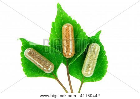 herbal capsules on sage leaves