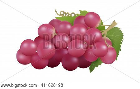 Red Grape. Realistic Grapes Bunch, Isolated Farm Fruit. Natural Raw Product, Winery Garden Element.