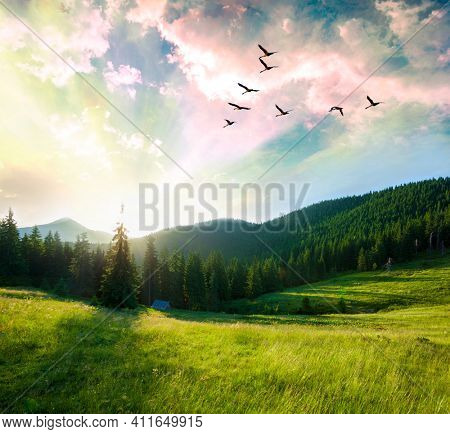 Summer mountain forest landscape at sunset.Flying birds over mountains.