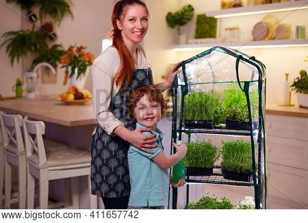 Organic Food Growing, Family Home Kitchen Gardening, Microgreen Sprouts Greenhouse