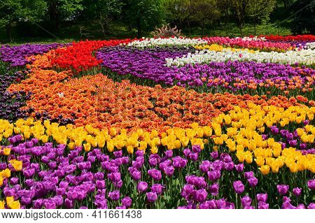 Many Colorful Tulips, Different Varieties Of Tulips, Bright Spring Flowers, Background Image, Select