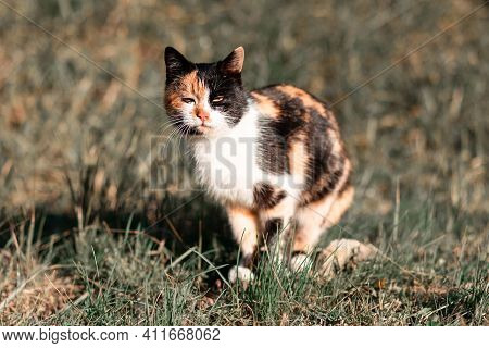 A Sad Homeless Cat Sits On The Grass. Concept Of Protection Of Animals.