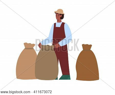 Worker Male Character At A Coffee Plantation Collects Coffee In Bags, Cartoon Vector Illustration Is