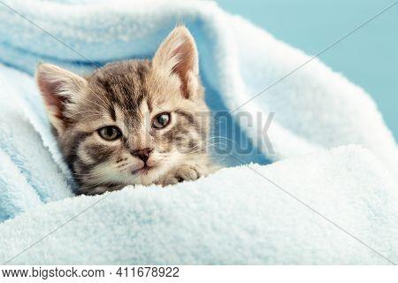 Kitten Portrait With Paws. Cute Tabby Kitten In Blue Plaid. Newborn Kitten Baby Cat Kid Domestic Ani