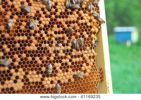 plenty of working bees on honeycomb in apiary poster