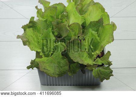 Red Lettuce Salad Red Lettuce Salad Red Lettuce Salad