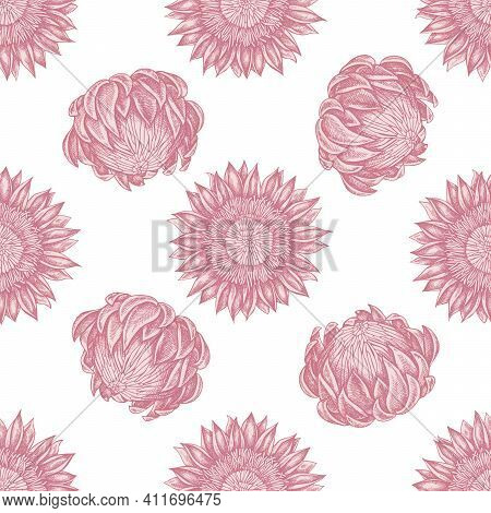 Seamless Pattern With Hand Drawn Pastel Protea Stock Illustration