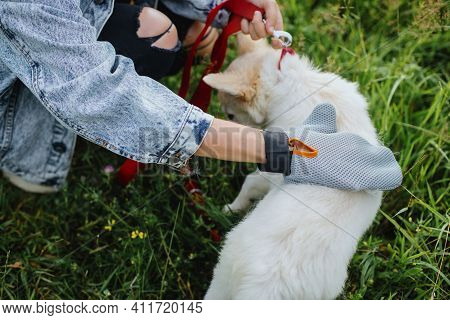 Molting Puppy, Pet Grooming. Woman Combing Out Puppy Fur With Deshedding Glove In Summer Park