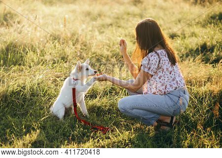 Woman Training Cute White Puppy To Behave And New Tricks In Summer Meadow In Sunset Light. Teamwork