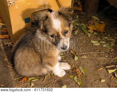 Small Brown Homeless Puppy On The Box Background. Small Lovely Brown Stray Mongre Fluffy Puppy Dog I