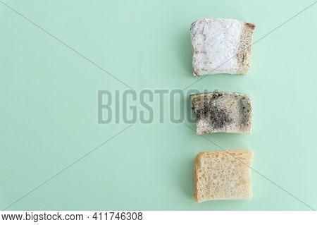 Comparison Of Three Peaces Of Bread: One With White Mould, Other With Black Mould And Third Is Clear