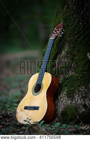 Acoustic Guitar, Leans On The Tree, Music Theme With Acoustic Guitar