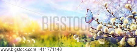Abstract Defocused Spring Scene - Butterfly On Catkins Branches In Sunny Landscape