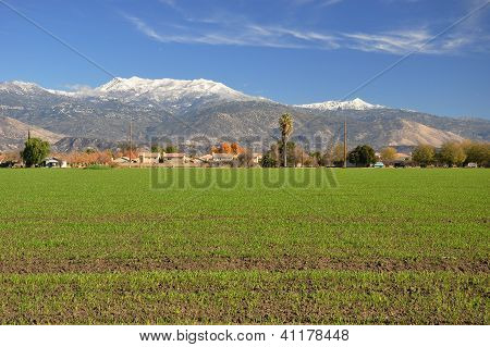 View of Mt. San Jacinto
