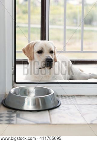 Hungry Sad Dog Purebred Labrador Breed Waiting For Dinner Time Outside Plastic Glass Door. Empty Met