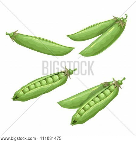 Green Peas Set. Eco Farm Fresh Food. Sweet Green Pea Pods. Closed And Open. Vector Illustrations Iso