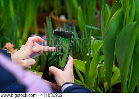 Hand Of Woman With Smartphone Taking Photo Of Blossom Flower Lily Of The Valley. Modern Technology A