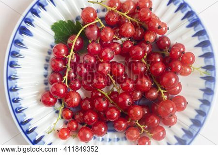 On A Saucer With A Blue Border Lie Ripe Red Currant Berries. Presented In Close-up On A White Backgr