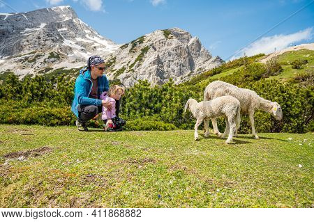 Cute Girl Looking At Sheep With Her Father In Mountain Pasture.