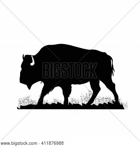 Bison Vector Stock Illustration. Black And White Buffalo. European Bison Close-up. Bull. A Canadian