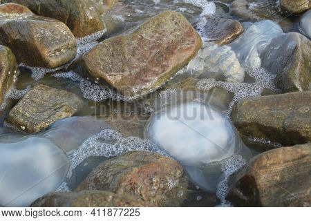 Kornerot Transparent Jellyfish Washed Up On The Shore Among The Rocks In The Sea Of Azov