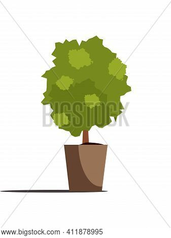 Decorative Tree In Pot Isolated On White Background. Potted Green Plant. Vector Ornamental Houseplan