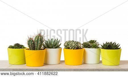 houseplants banner,  variety of succulents, cacti and sempervirum plants in flower pots on a shelf isolated on white