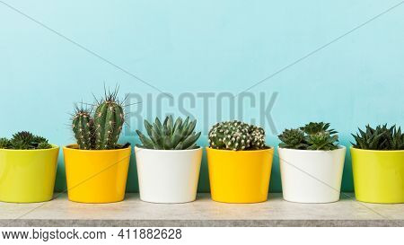 houseplants banner,  variety of succulents, cacti and sempervirum plants in flower pots on a shelf at sky blue wall