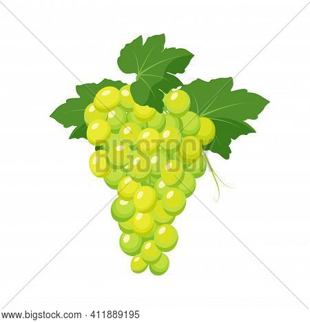 Bunch Of White Grapes. Grape Product, Vector Illustration Isolated On White Background.
