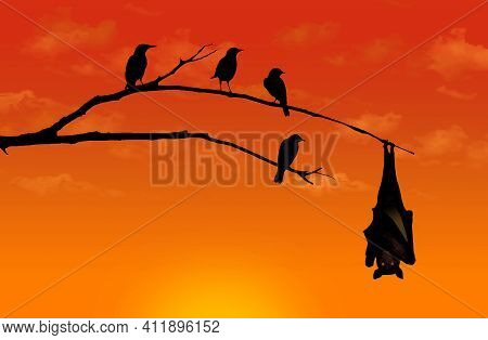 Silhouetted Starling Birds Look Curious As They Roost On A Tree Limb, Sharing The Space With A Bat H