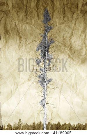 Abstract Tree Scene