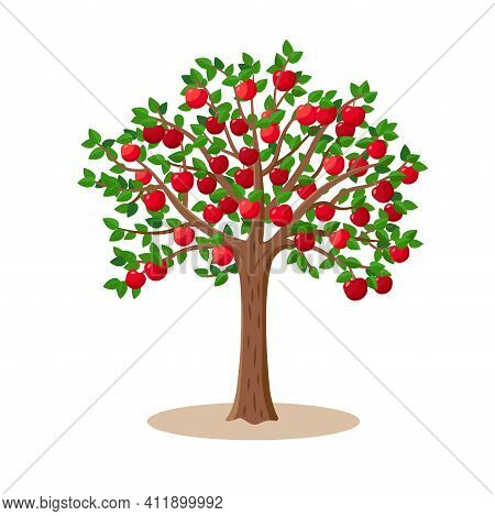 Apple Tree With Red Apples Fruits On Branches - Vector Illustration Isolated On White Background.