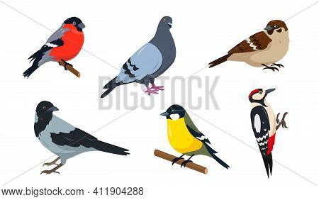 City Birds Icons Set. Bullfinch, Sparrow, Tit, Woodpecker, Pegeon And Crow. Birds In Different Poses