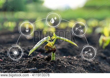 Smart Farming With Iot,growing Corn Seedling With Infographics. Smart Farming And Precision Agricult
