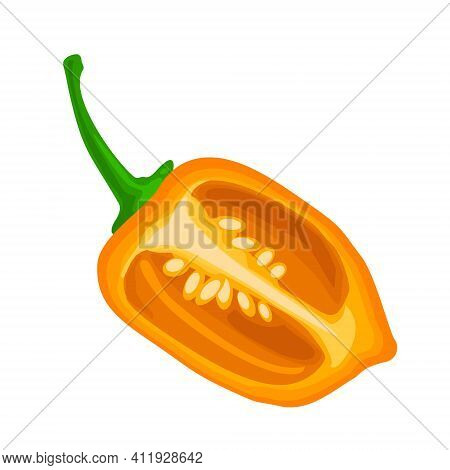 Half Pepper Habanero. Vector Color Illustration Isolated On White Background.