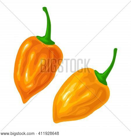 Two Whole Peppers Habanero. Vector Color Illustration Isolated On White Background.