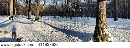 Panoramic Image Of Winter Park, Shadow Of Black Trunks Of Trees At Sunset