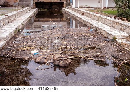 Dam In Basin With Wastewater Of Abandoned Sewage Treatment Plant Formed Naturally Due To Debris And