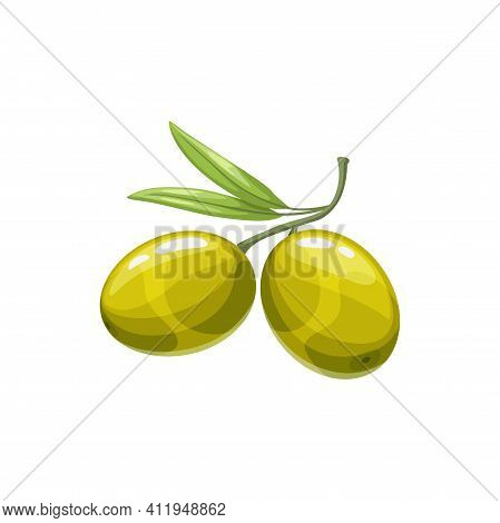 Green Olive Berries Vector Natural Vegetable, Healthy Food. Isolated Cartoon Organic Ripe Plant On S