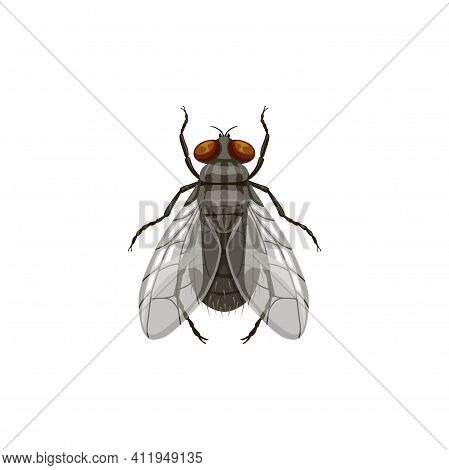 Fly Icon, Pest Control And Insect Parasite, Blowfly Vector Isolated. Pest Control Disinsection, Disi