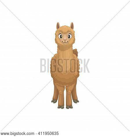 Guanaco Lama Guanicoe Native To South America, Related To Llama. Vector Flat Cartoon Llama Animal Po