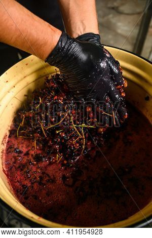 A Man Squeezes The Juice From The Grapes With His Hands On Wine, Home-made Wine.
