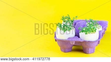 Banner With Garden Cress Growing In Eggshells, On A Yellow Background, Horizontal, Copy Space