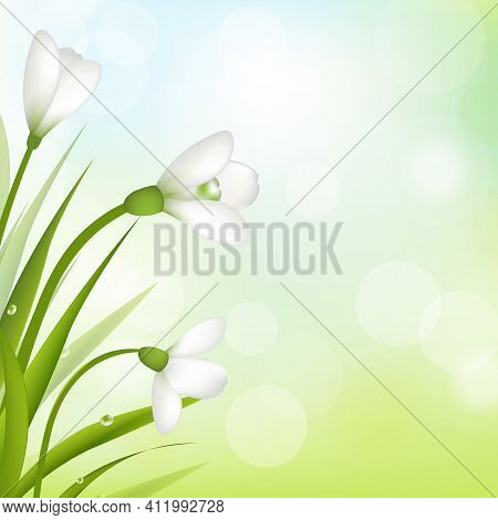 3 Snowdrops With Bokeh And Leaf, Vector Illustration